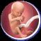 Baby Movement