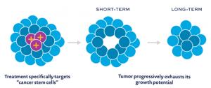 Breast cancer stem cell antigens